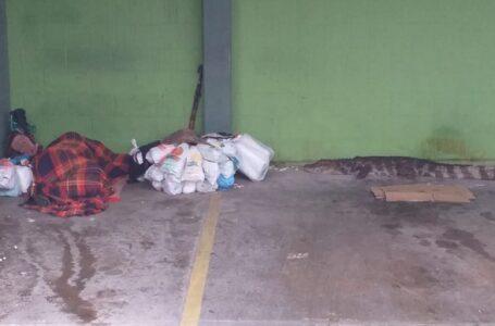PERIGO: Jacaré chega a 1 metro de morador de rua que dormia em estacionamento e mobiliza a PM